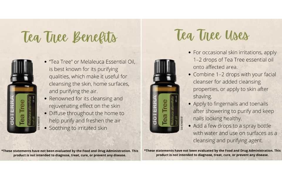 immune boost essential oils for health and wellness doterra uk tea tree